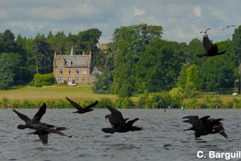 tourisme-chateau-cormoran-340x225