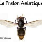 BI_EEE_Frelon-Asiatique_340X200