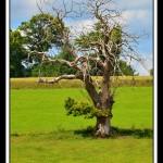 ER_GAL_arbre-web-G