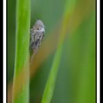 insecte-webG